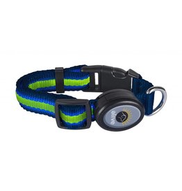 Elive LED Dog Collar Blue/Green Md