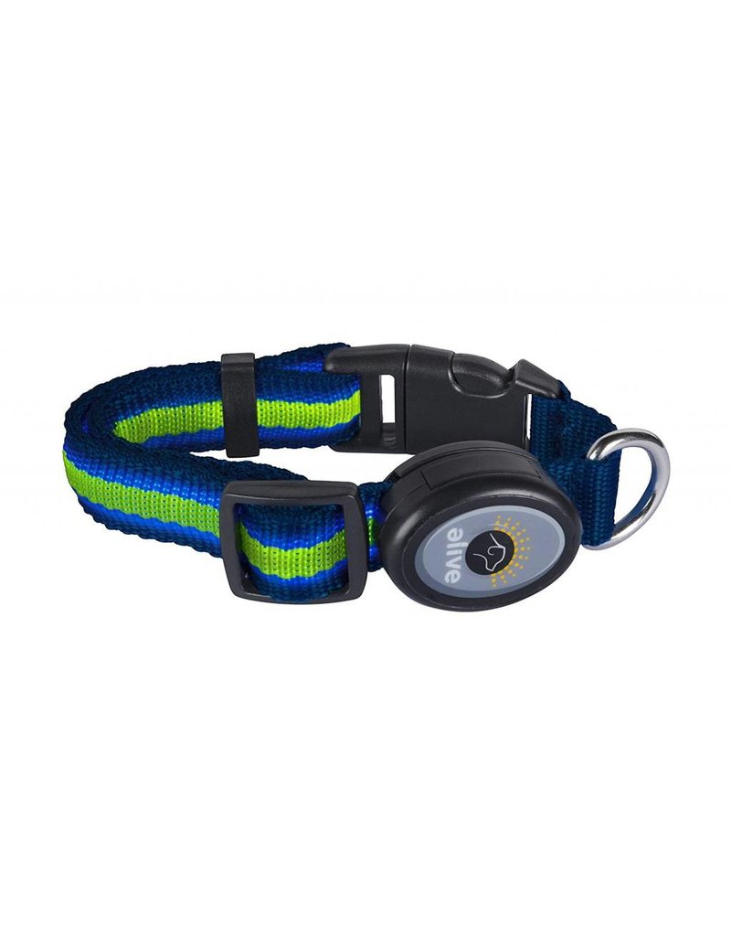Elive LED Dog Collar Blue/Green Small