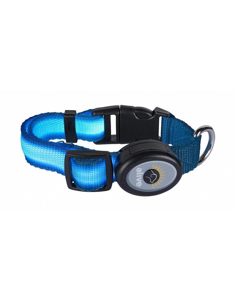 Elive LED Dog Collar Light Blue Small/Medium