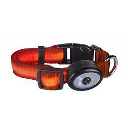 Elive LED Dog Collar Orange Small