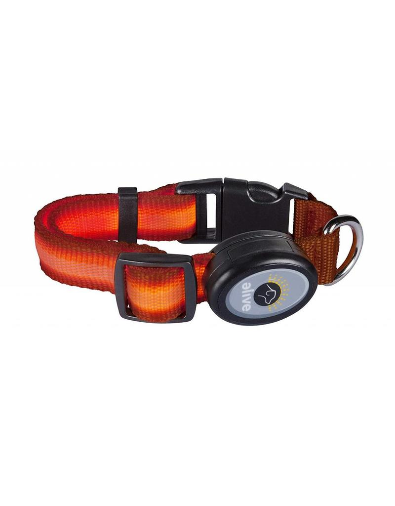Elive LED Dog Collar Orange Small