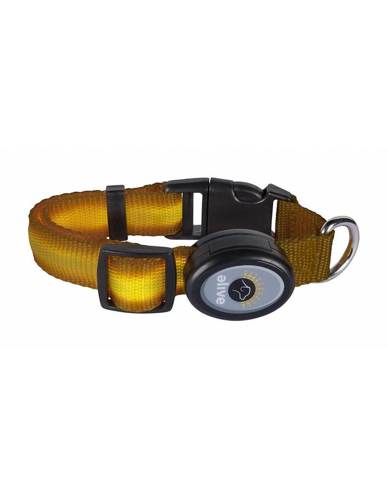 Elive LED Dog Collar Yellow Small/Medium