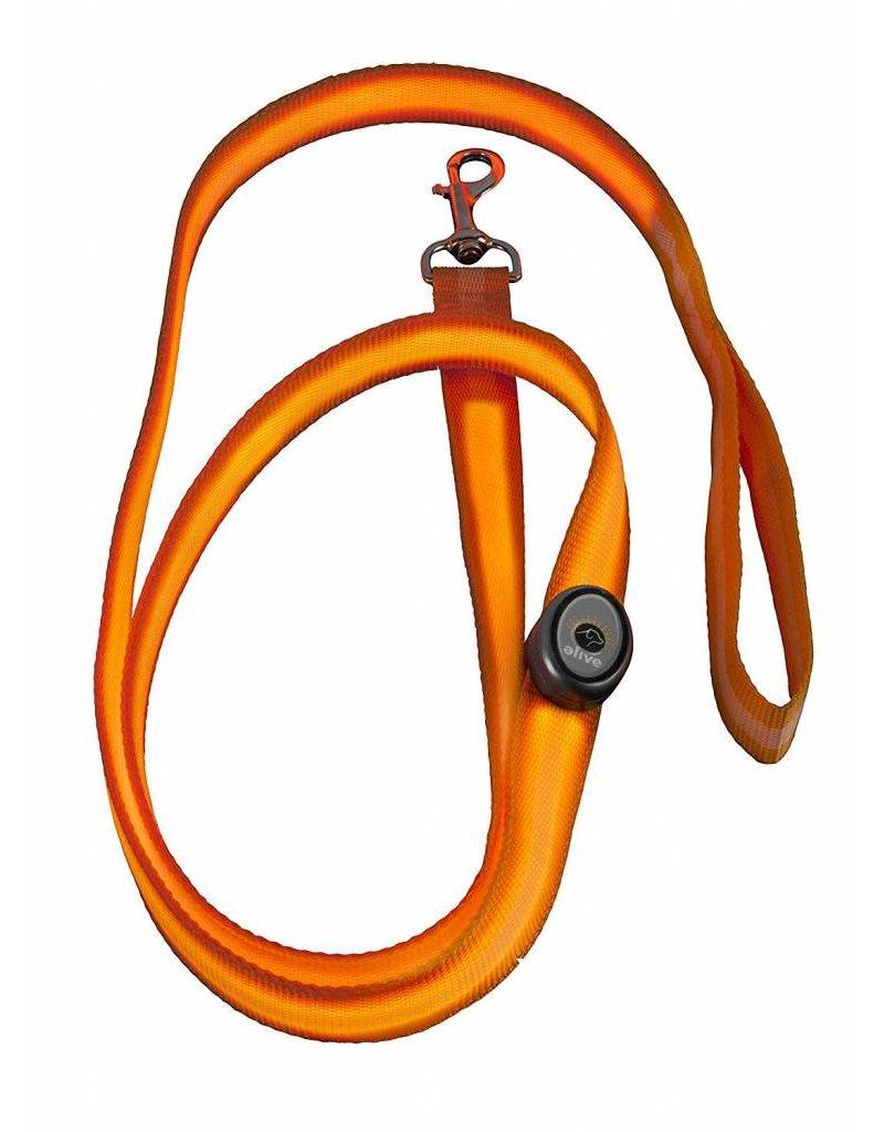 Elive LED Dog Leash 6' Orange