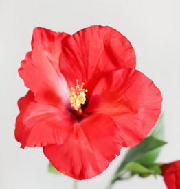 poo-pourri tropical hibiscus 10mL poo-pourri pocket-sized