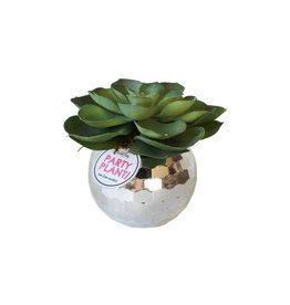 packed party disco party planter