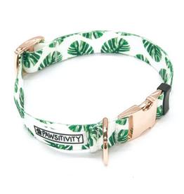 tropical palms dog collar