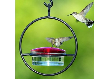 Hummingbird Products
