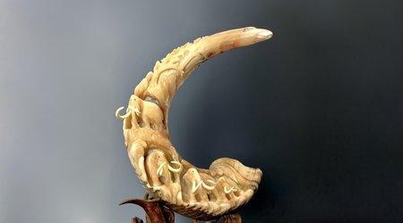 Sheep Horns