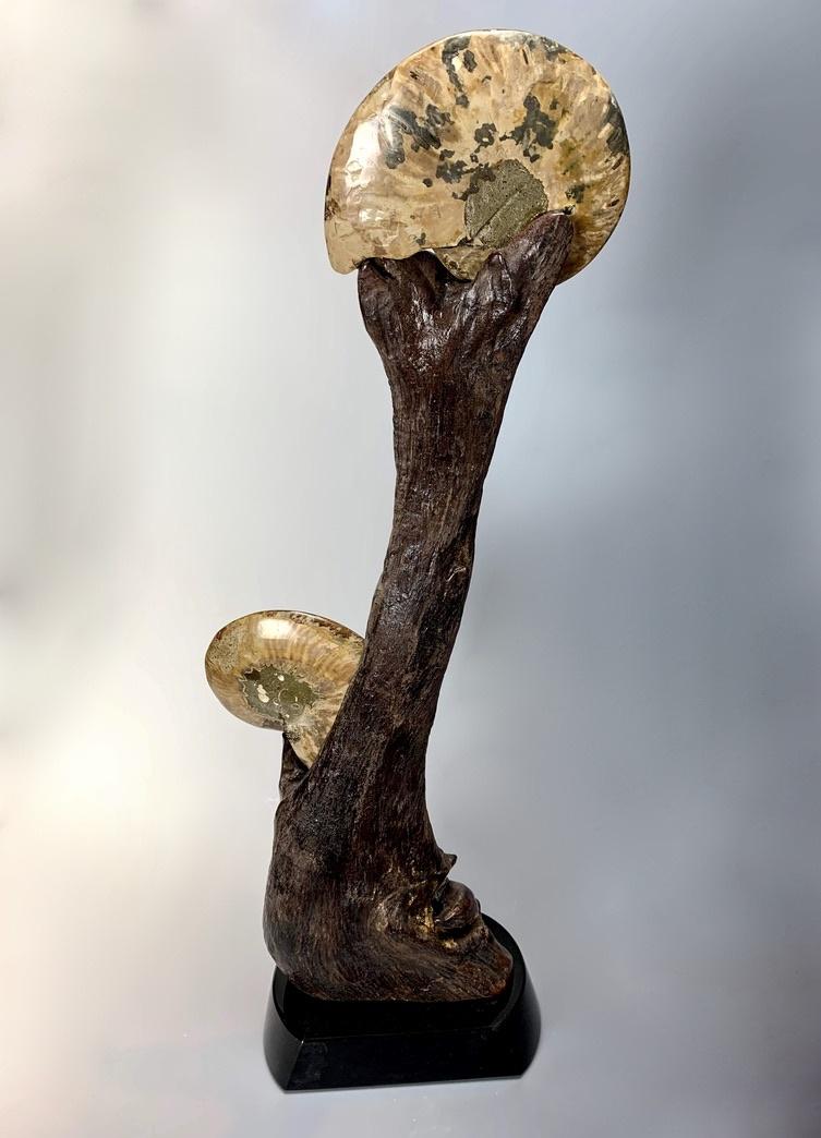 """Ammonite Inlaid with Ammolite Fossil"" (#191)"