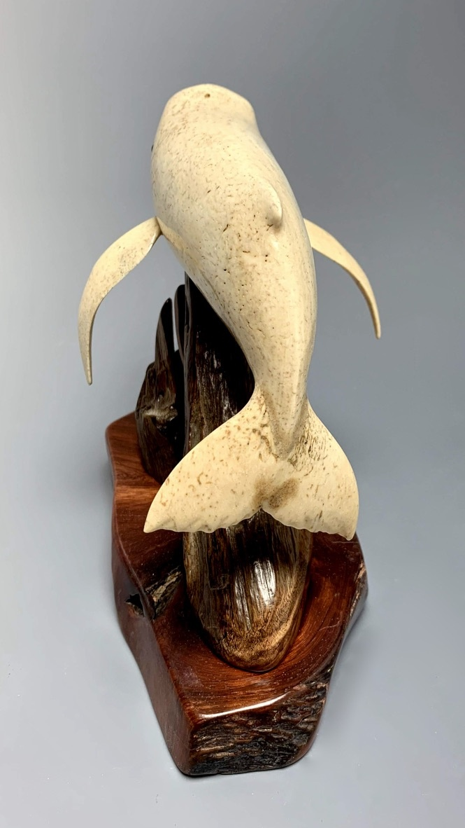 Harold- The Humpback Whale Carved from Fossilized Walrus Jawbone Sculpture #226