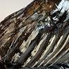 - Fossilized Mammoth Molar #296