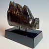 - Fossilized Mammoth Molar #297