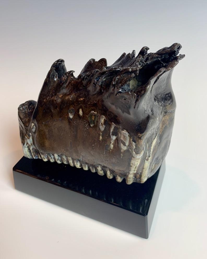 Fossilized Mammoth Molar #297