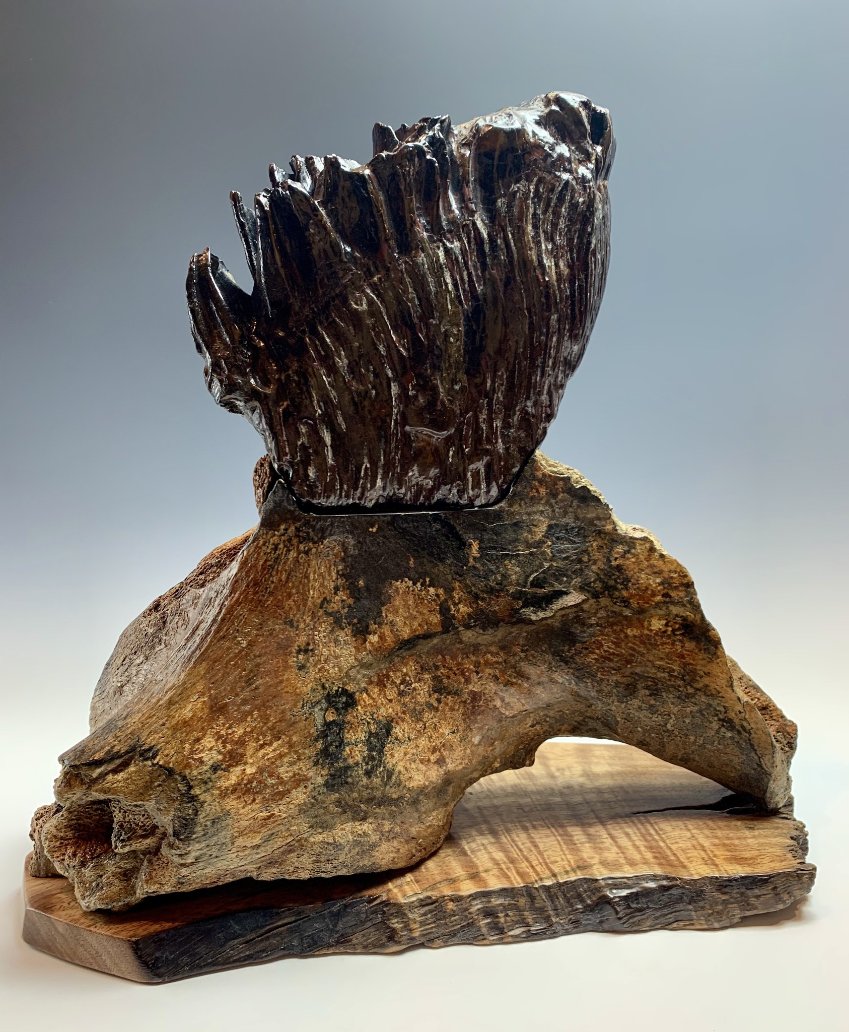 - Fossilized Mammoth Molar #305