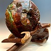 - Ammolite on Rosewood #299