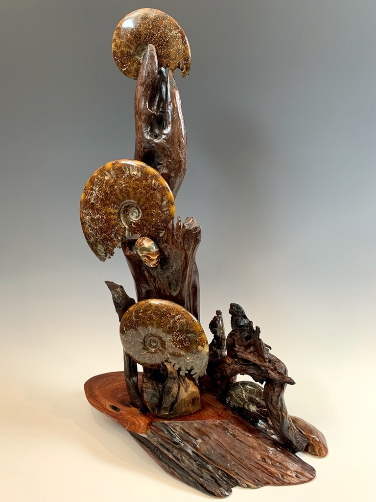 Ammonite Fossil on Rose Wood #319