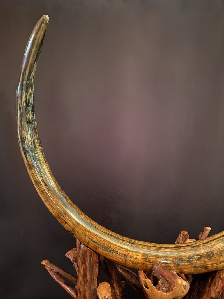- Fossilized Mammoth Tusk #322