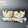 The Andersons - Sea Otter Family Soapstone on Fluorite #150