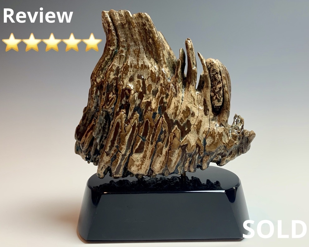 - Fossilized Mammoth Molar #298