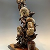 - Ammonite Fossils and Rose Wood #323