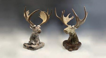 Moose, Caribou, Elk