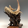 - First Breath - Sheep Horn Sculpture #456