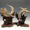 -  First Breath - Sheep Horn Humpback Whale Sculpture #453
