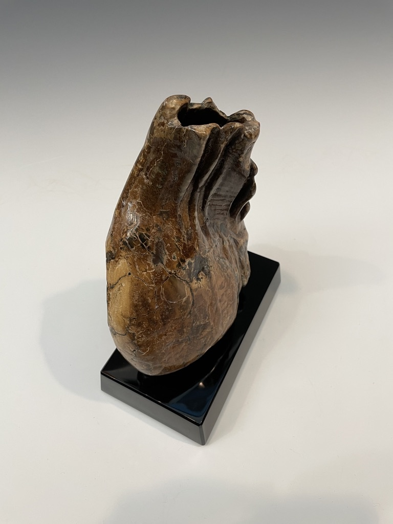 Fossil Mammoth Molar #493