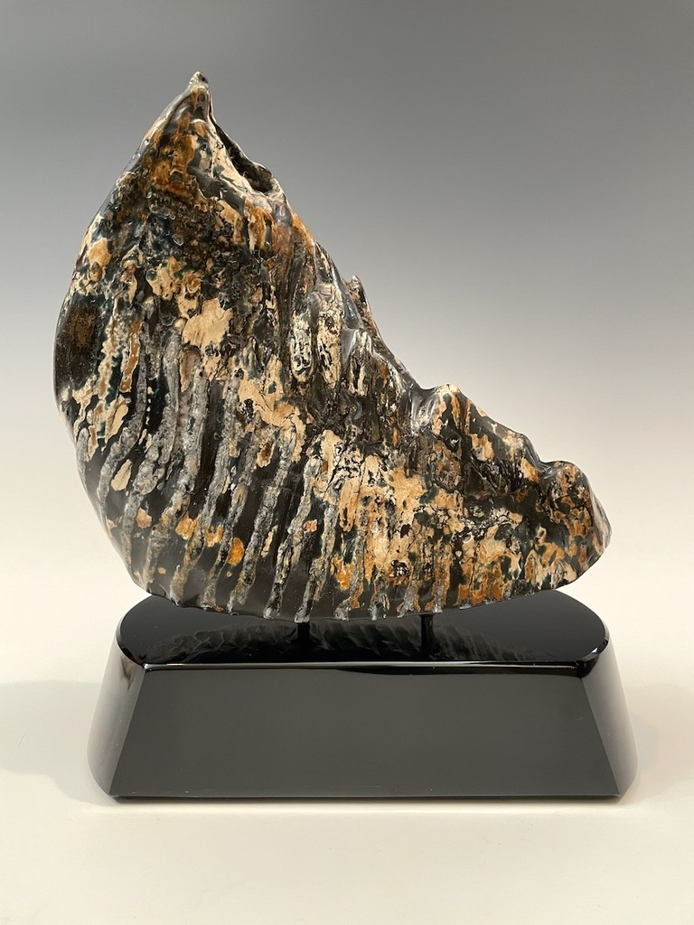 Fossil Mammoth Molar #494