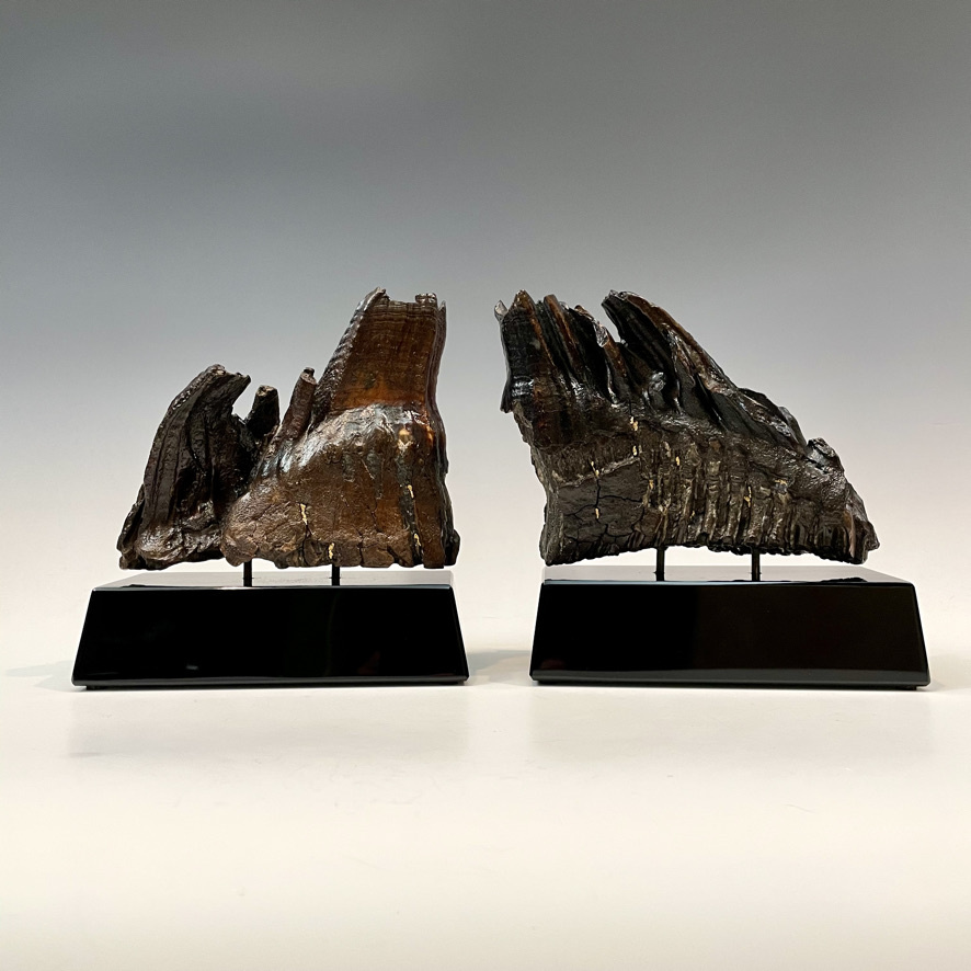 Fossil Mammoth Molar and AK Gold Nugget #496