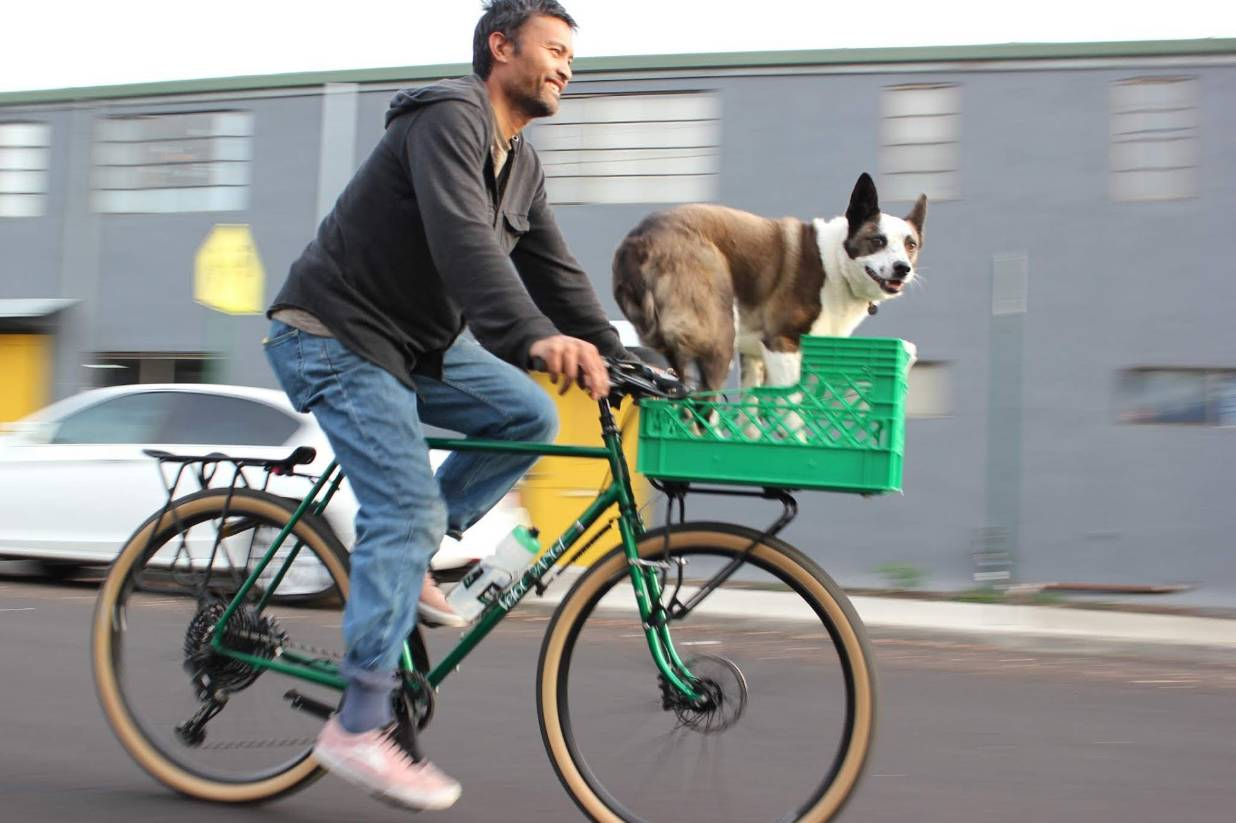 Customized bike for dogs schlepping