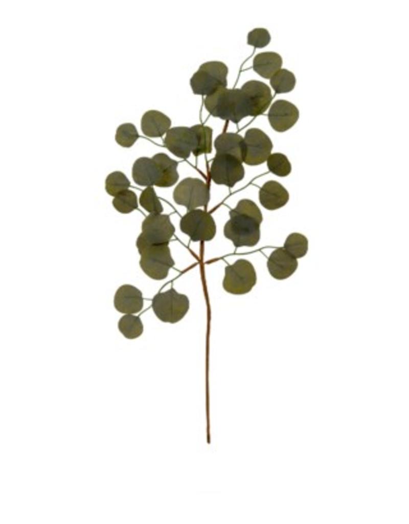 Eucalyptus Sprig