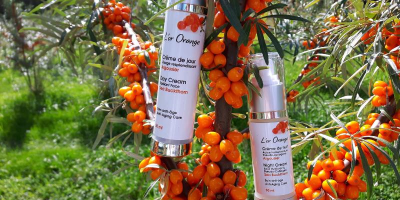 L'argousier : un « or orange » pour la peau !