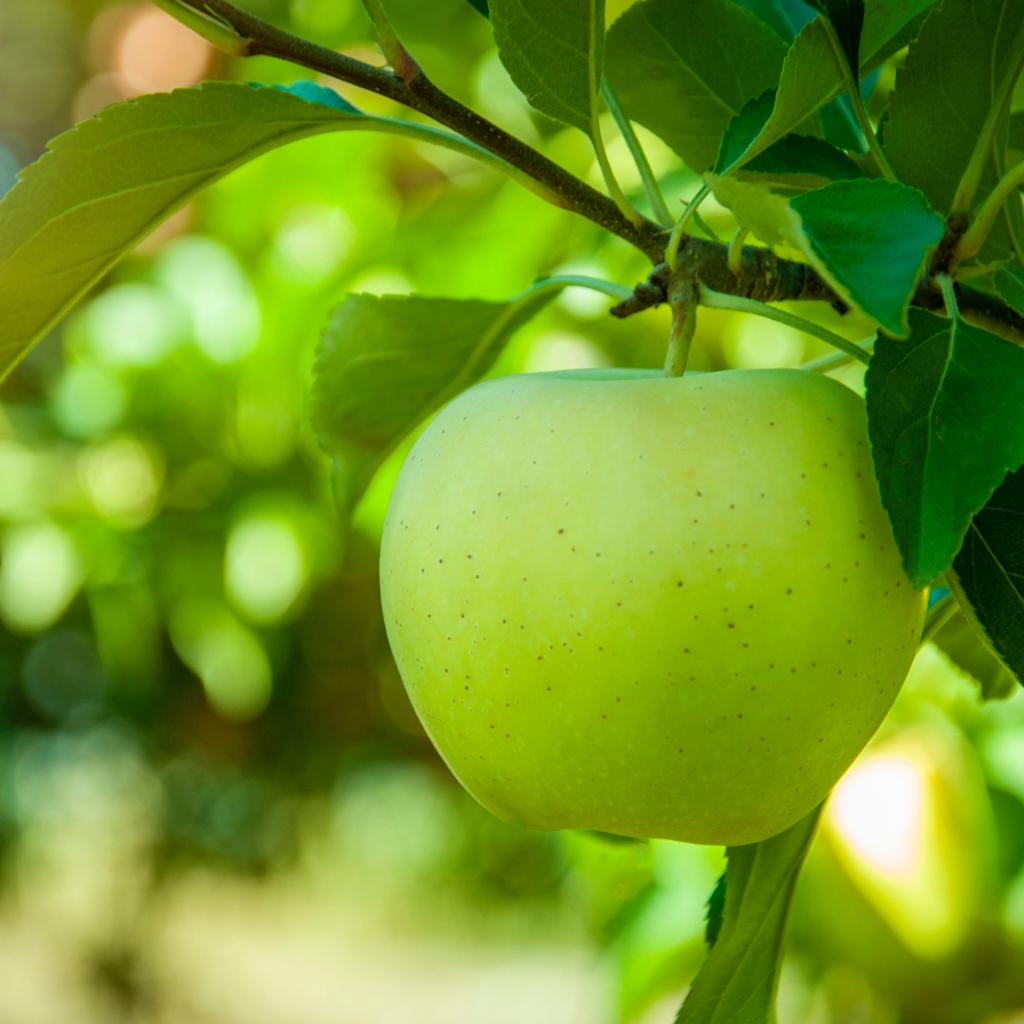 eau distillee pomme