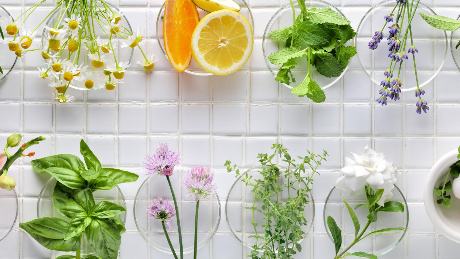 Quelles plantes utilisons-nous pour dorloter votre peau ?