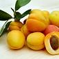 Huile d'abricot