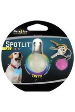 Spotlit Led Light Disco