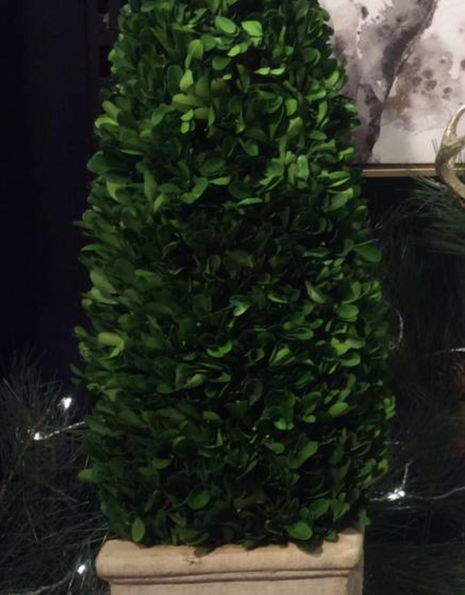 Taupière plantes conservées