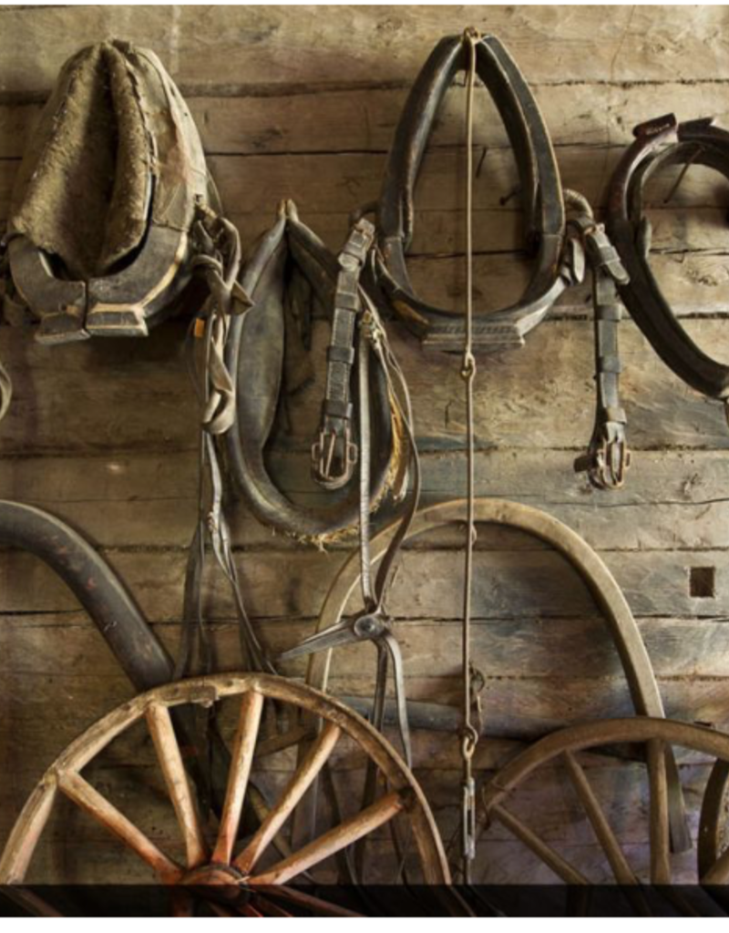 Toile accessoires pour chevaux   22x28