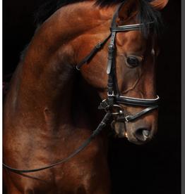 Toile tête de cheval 30x45