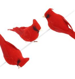 Cardinal rouge et noir