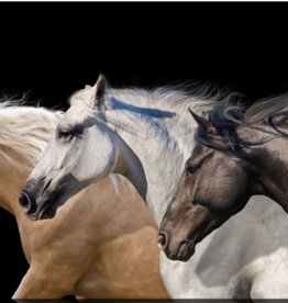 "Toile ""Horse Trifecta"" 30x60"