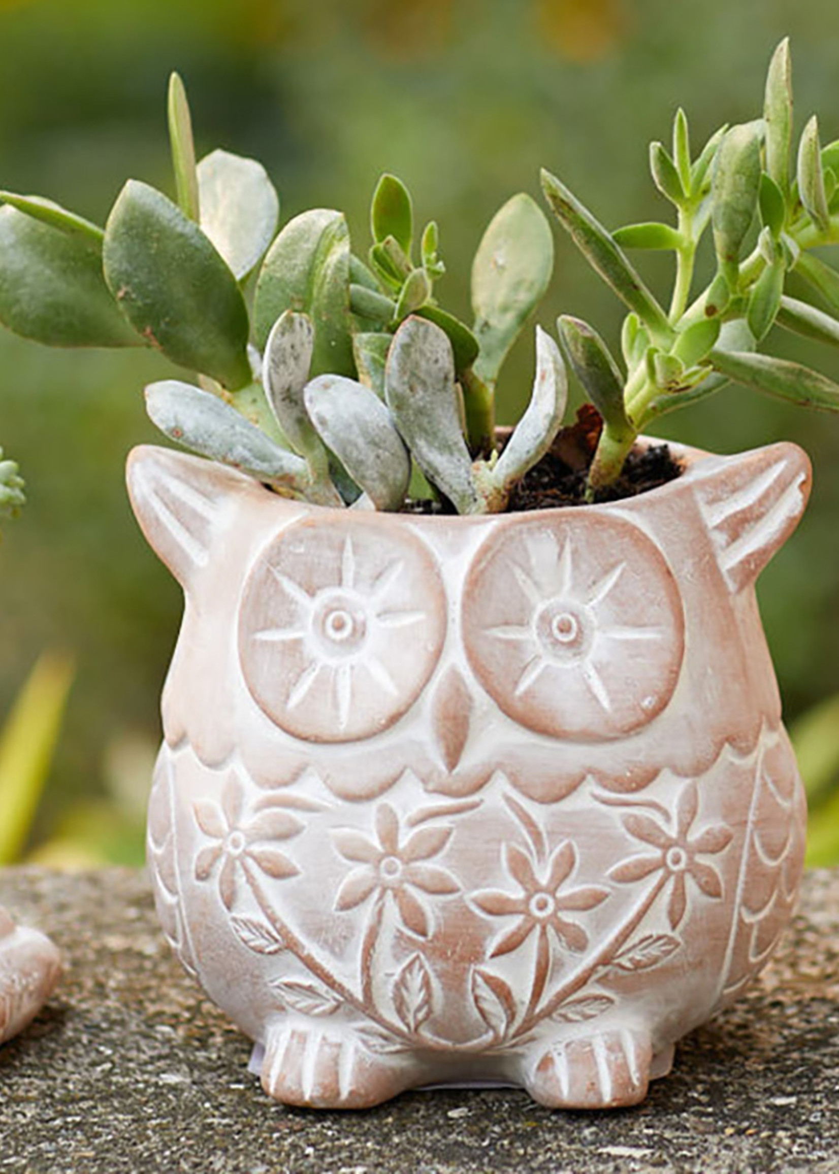 Who Owl Planter