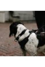 Le chien blanc MOE harness