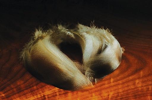 Bronze Mallard Feathers