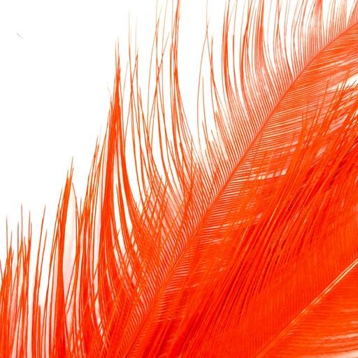 Rhea Tail Plumes