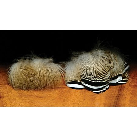 Wood Duck Feathers