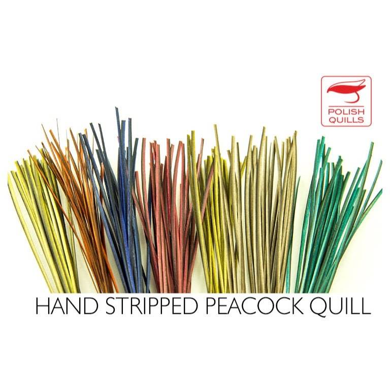 Polish Stripped Peacock Quills
