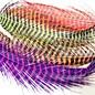 Barred Rhea Tail Plumes