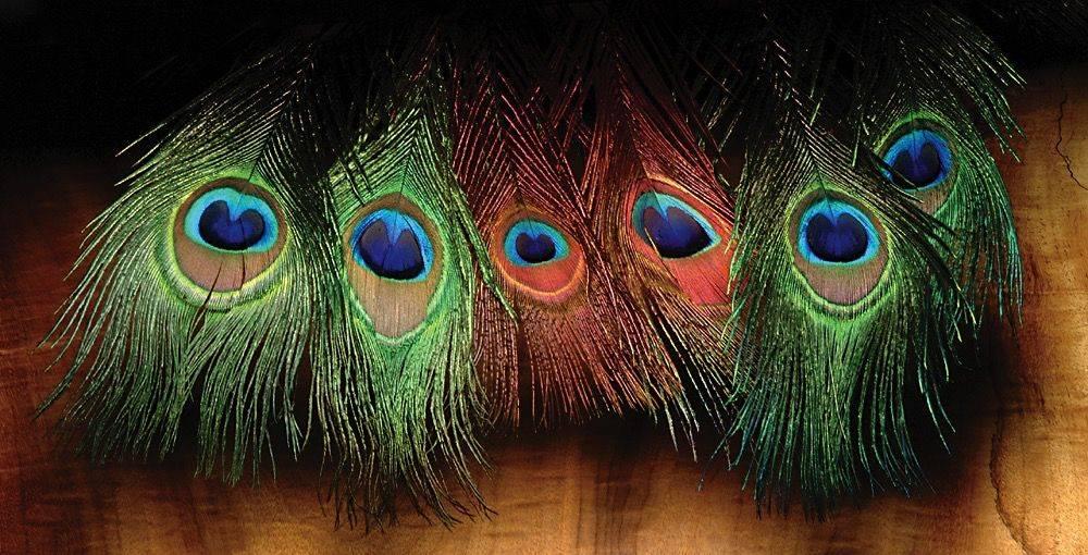 Peacock Eyed Sticks